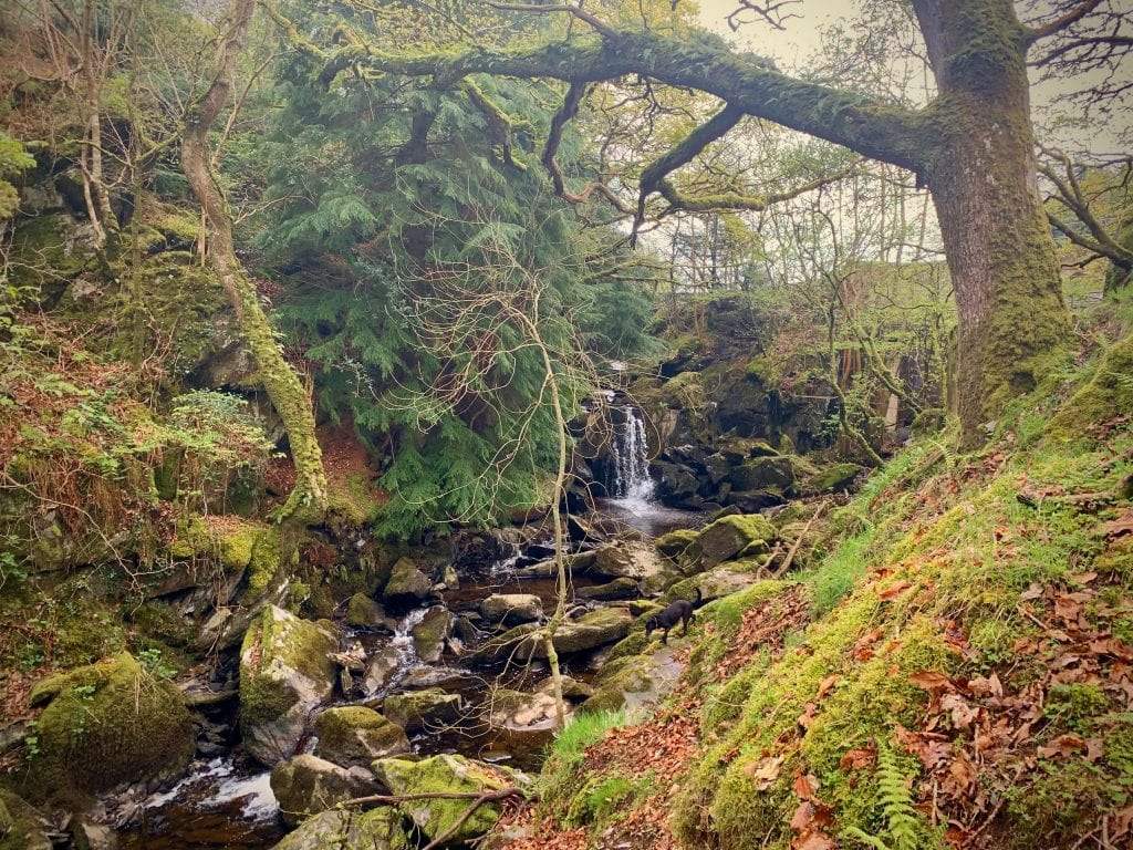 Cynwyd forest waterfall by the reservoir in ancient forest off grid sustainable eco glampsite and glamping