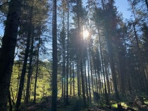 Cynwyd forest and the reservoir... 1 off grid sustainable eco glampsite and glamping