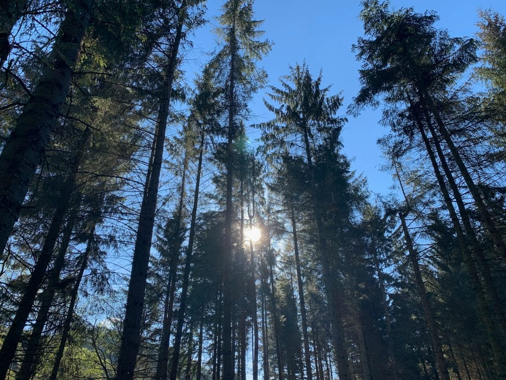 Cynwyd forest beautiful trees off grid sustainable eco glampsite and glamping