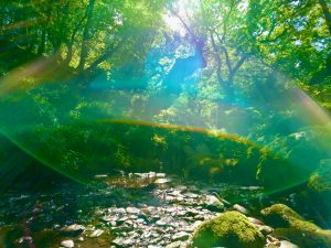 Green glade and gorge cynwyd ancient forest off grid sustainable eco glampsite and glamping