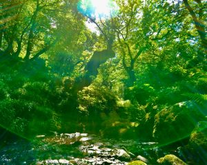 Green glade earth mother cynwyd ancient forest off grid sustainable eco glampsite and glamping