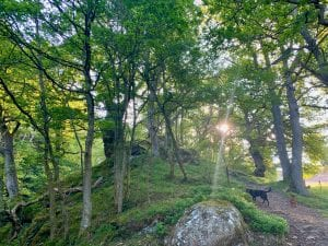 In the ancient cynwyd forest by the waterfall off grid sustainable eco glampsite and glamping