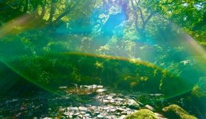 The ancient forest glade and gorge with waterfalls in cynwyd forest off grid sustainable eco glampsite and glamping
