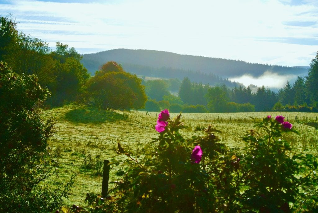 Wake up and smell the roses off grid sustainable eco glampsite and glamping